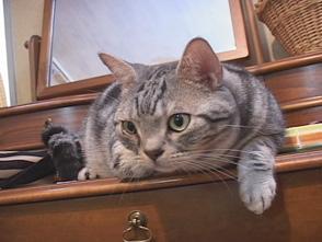 Cat Healing ねこちゃんといっしょ #9 こねこ アクション編