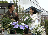 手づくり花づくり #969『魅惑のクレマチス』