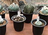 手づくり花づくり #976『不思議!植物の多様性』