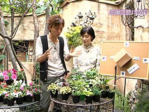手づくり花づくり #977『日陰に強い植物』