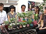 手づくり花づくり #981『部屋の中で緑を楽しむ』