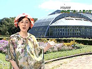 手づくり花づくり #986『植物園で楽しむ夏の花』