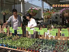 手づくり花づくり #989『おすすめ秋野菜』