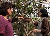 手づくり花づくり #1001『個性ある沖縄のお庭』