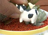 手づくり花づくり #1009『多肉植物で遊ぼう!』