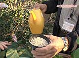 手づくり花づくり #1014『熱帯植物の知恵』