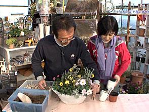 手づくり花づくり #1018『春に咲くキク科の花』