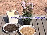 手づくり花づくり #1021『春ギフトの季節 手作りの鉢植えをプレゼントしませんか』