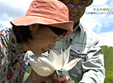 手づくり花づくり #1034「涼を感じるハスの世界」