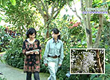 手づくり花づくり #1035「温室で熱帯植物を探索」