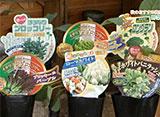 手づくり花づくり #1042「秋のおすすめ商品紹介」