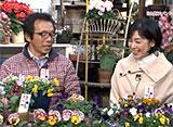 手づくり花づくり #1058「花色豊富なパンジー&ビオラ」