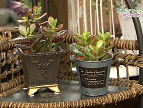 手づくり花づくり #1068「部屋にグリーンを!一鉢から始めよう」