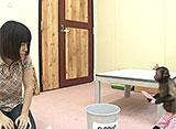 いきいき動物ビデオ 4巻