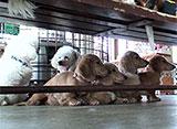 いきいき動物ビデオ 8巻