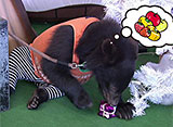 いきいき動物ビデオ 12巻