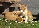 猫、大好き! 子猫がいっぱい!!