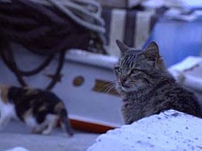 猫、大好き! イドラ島は猫の島