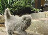 猫、大好き! 世界でたった一匹?!紫色の猫