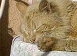 猫、大好き! 山間に暮らす猫32匹