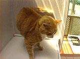 猫、大好き! 超豪華キャットホテル