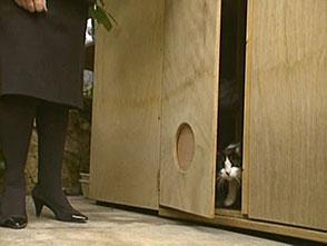 猫、大好き! レーサーと暮らす猫