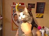 猫、大好き! 北米最大!チャイナタウンの散歩猫