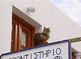 猫、大好き! エーゲ海一美しい島の猫たち
