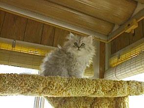 猫、大好き! 猫シャンプーのスペシャリスト