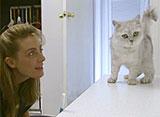 猫、大好き! 猫も日本語を話しますか?