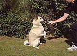 犬、大好き! 愛犬スポーツ界のプリンス登場