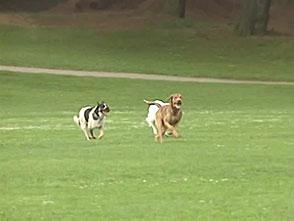 犬、大好き! サンフランシスコの犬専用公園