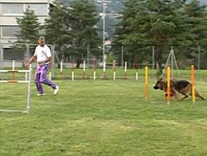 犬、大好き! ヨーロッパで大流行!犬のスポーツ