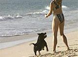 犬、大好き! 愛犬たちの楽園 ドッグビーチ