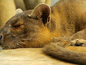 上野動物園の世界 マダガスカルの動物
