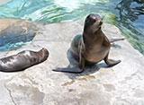 上野動物園の世界 北アメリカの動物