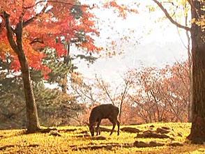 紅葉 名所絶景を訪ねて オープニング