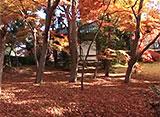 紅葉 名所絶景を訪ねて 京都の紅葉