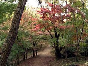 紅葉 名所絶景を訪ねて 寒霞渓(香川)