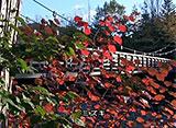 紅葉 名所絶景を訪ねて 赤沢自然休養林(長野)