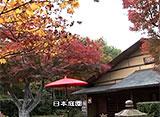 紅葉 名所絶景を訪ねて 国営昭和記念公園(東京)