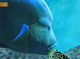葛西臨海水族園の世界 世界の海