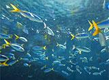 葛西臨海水族園の世界 東京の海