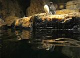 葛西臨海水族園の世界 海鳥の生態