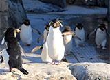 葛西臨海水族園の世界 ペンギンの生態