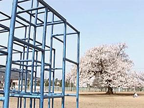 卒業桜 オープニング 仰げば尊し