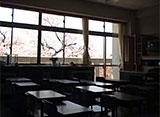 卒業桜 土浦市立真鍋小学校(茨城)