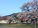 卒業桜 小川町立小川小学校 下里分校(埼玉)