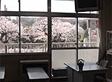 卒業桜 秦野市立南小学校(神奈川)