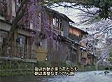 さくら百景 京の春